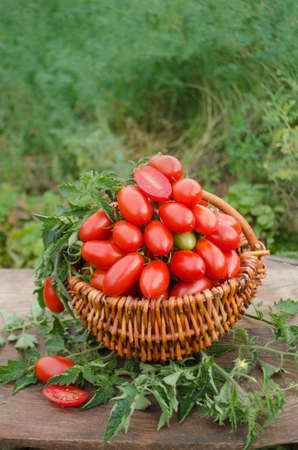 Group of plum  tomatoes on a wooden table.  Italian plum tomatoes. Agriculture industry and farming