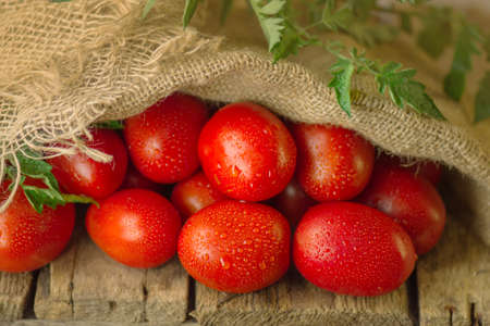 Natural  product concept. Fresh long plum tomatoes in burlap bag.