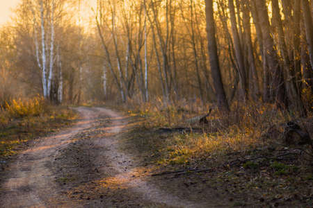 Footpath through forest in autumn Colorful autumn footpath. Autumn forest road. Beautiful morning in autumn forest