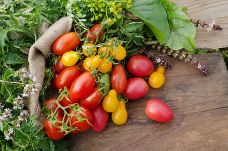 Juicy red tomatoes in basket lying in the summer grass.  Large basket full of different tomatoes.