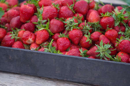 Strawberries in a box of fruit at a farmers market. Ripe red strawberries on locally farmers market Stockfoto