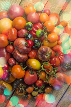 The harvest of assorted tomatoes.  Organic  green, red, yellow, orange tomatoes. Variety fresh colorful tomatoes. Tomatoes different varieties. 免版税图像