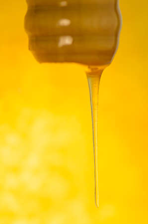 Melted caramel dripping.  Pouring  stream of caramel sauce. Hot sweet liquid syrup.  liquid caramel. Dripping golden syrup