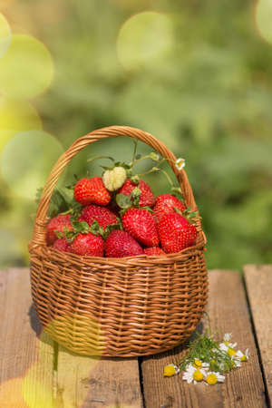 A basket full of strawberries. Natural strawberries  agriculture. Freshly picked strawberries in a basket on wooden table