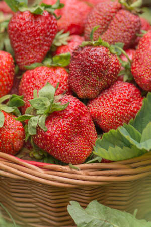 Strawberries healthy berries in sunny day. Fresh berries healthy food in basket. Berries closeup colorful