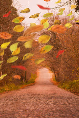 Colorful warm autumn leaves in freefall. Autumnal mood background. Autumn mix leaves.