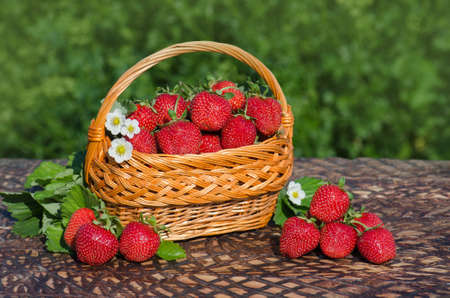 Basket of freshly harvested strawberries in berry garden. Freshly picked strawberries. Picking ripe organic strawberries on wooden table Stock Photo