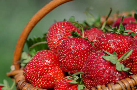 Group of strawberry. Fresh juicy strawberries. Strawberries with strawberry leaf. Fresh strawberries fruits