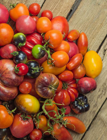 The harvest of assorted tomatoes. Organic green, red, yellow, orange tomatoes. Variety fresh colorful tomatoes. Tomatoes different varieties.