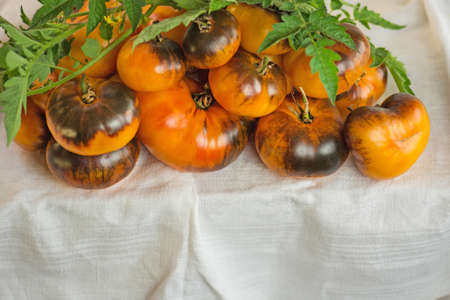 Fresh ripe delicious tomatoes. Organic fresh juicy brown and yellow tomatoes. Stock Photo