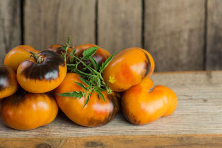 Ripe tomatoes on rustic wooden background. Colorful tomato Alices Dream on a table.