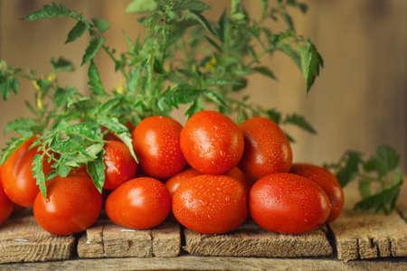 Fresh organic juicy Roma tomatoes. Tomatoes Roma on table