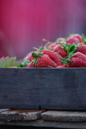 Strawberries in a box of fruit at a farmers market. Ripe red strawberries on locally farmers market Stock Photo