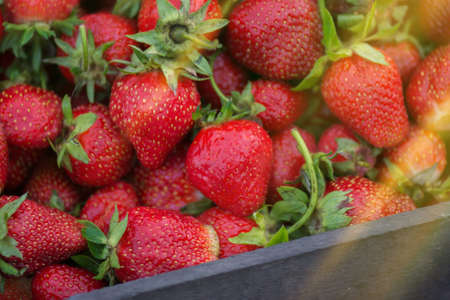 Set of red and ripe strawberries. Red fresh strawberries. Fresh strawberry close up. Summer ripe strawberries Stock Photo