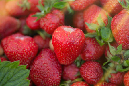Group of strawberry. Fresh ripe perfect strawberry. Fresh juicy strawberries. Strawberries with strawberry leaf Stock Photo