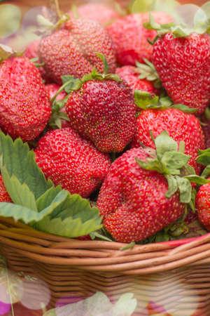 Background of fresh strawberries. Fresh juicy berries macro. Many strawberries from the garden