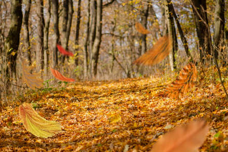 Border frame of autumn leaves falling on landscape background. Beautiful colored autumn leaves falling. Stock Photo