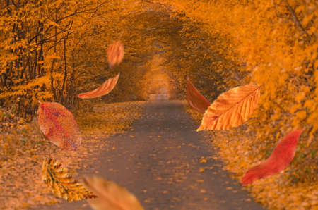Border frame of autumn leaves falling on landscape background. Frame from colorful autumn leaves in the forest.