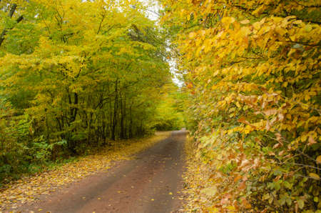 Autumn walk with old road in the forest. Autumn landscape with road at sunset. Autumn landscape with colorful fall foliageof trees