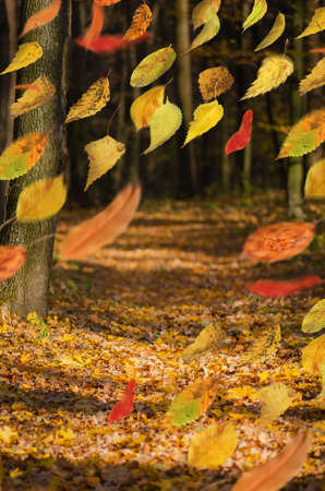 Border frame of autumn leaves falling on landscape background. Beautiful colored autumn leaves falling. Autumn tree leaves natural background