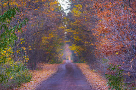 The road passing through dark mystical atmosphere park. Mysterious fairy forest in a fog. Foggy autumn forest. Autumn dark forest with rural road