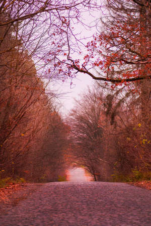 Autumn forest tunnel. Forest tunnel of trees and bushes. Autumn moody dramatic tunnel