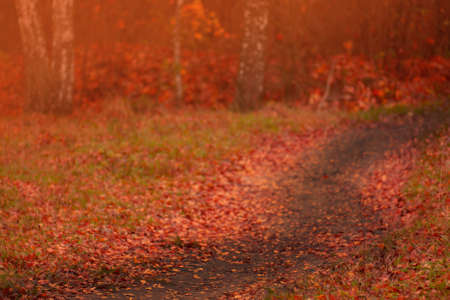 Majestic forest with fallen foliage on the ground. Park with sunny beams. Autumn forest with dirty road