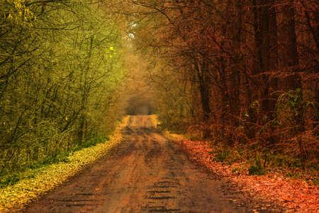 Autumn forest natur. Landscape with pleasant warm sunshine. Summer meets autumn