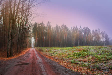Mystical magic fall forest. Forest with rural magical road in fog. Mystic autumn scary road. Magical forest scene. Dreamy autumn foggy forest