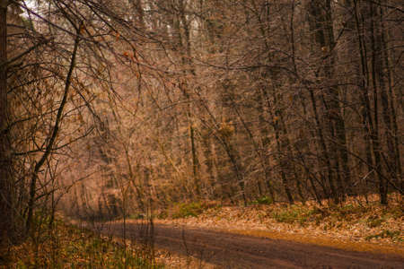 Autumn forest with path. Autumn dawn scenery with colorful trees. Forest road on magical autumn morning
