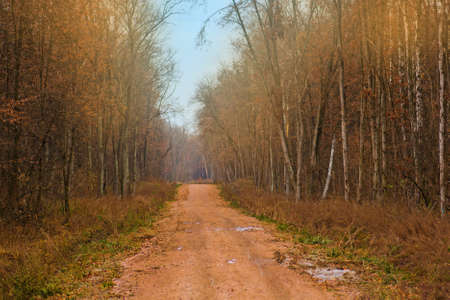 Majestic autumn rural scenery way. Falling leaves on autumn forest.