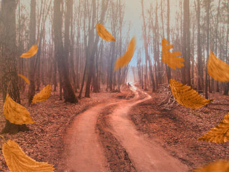 Autumn forest natur. Landscape with pleasant warm sunshine. Falling autumn leaves.