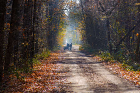 Ride in a horse drawn wagon in autumn woods with yellow leaves. Horse carriage on on autumn road
