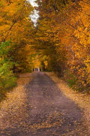 Road in the evening in autumn sunset. Peoples in autumn forest. Unrecognizable group of people on a hiking trip. Walk in breathtaking autumn forest