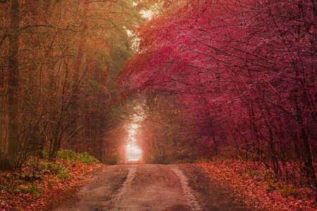 Beautiful autumn romantic tree tunnel. Natural tree tunnel in Ukraine. Love tunnel in autumn. Real wonder of autumn nature
