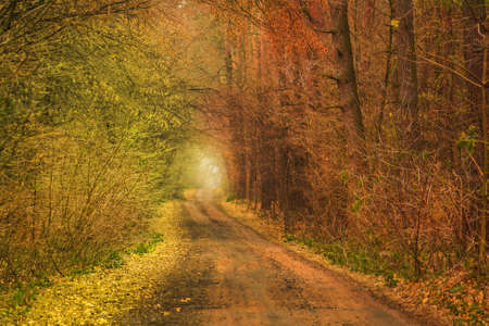 Autumn forest tunnel of love. Forest tunnel of love. Autumnal tunnel of trees and bushes. Autumn moody dramatic tunnel of love. Love tunnel in autumn