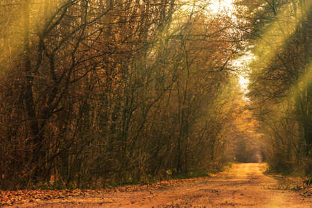 Beautiful autumn romantic tree tunnel. Natural tree tunnel in Ukraine. Love tunnel in autumn. Autumn forest tunnel of love. Forest tunnel of love Foto de archivo