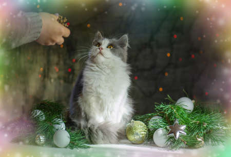 Woman with cat near Christmas tree at home. Woman with cat over christmas tree.