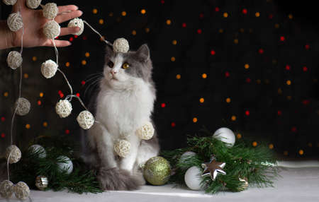 Kitten broke a Christmas tree. Cat destroys Christmas tree. Woman cleans after the cat has turned over the Christmas tree