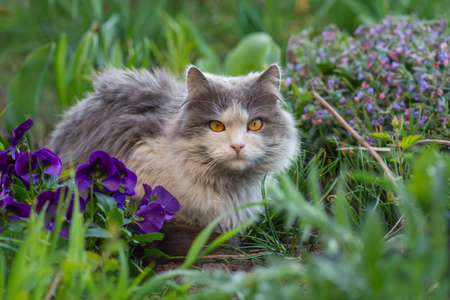 Happy young cat outtdoor between flowers. Pet freedom and enjoying nature concept. Reklamní fotografie
