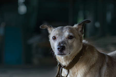 Adopting a dog. Shelter for homeless dogs. Homeless dog looks with huge sad eyes