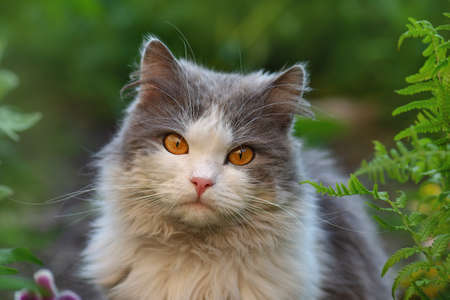Pretty cute cat is sitting on the meadow. Concept healthy and active pet lifestyle. Cat in garden. Cat portrait close up