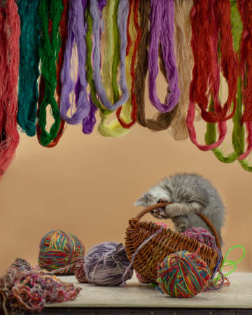 Baby kitten playing with many ball of woolen threads. Kitten playing with multicolored clew. 免版税图像