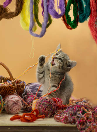 Cute kitten sitting in a basket with balls of yarn. Kitten sitting in a basket with woolen thread. Kitten plays with balls of wool in basket. Cute fluffy cat playing with clew of thread.