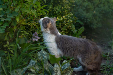 Cat smelling herb among blooming flowers. Kitty sniffing flower. Cat smelling aroma flower.