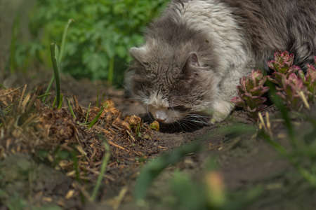 Adorable young cat smelling herb on the sunny garden among flowering nature. Cat smelling herb among blooming flowers.