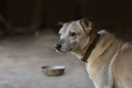 Hungry dog stands near an empty bowl in a dog shelter. Hungry homeless dog in dog shelter and need help. 免版税图像
