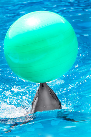 Glad beautiful dolphin in blue water in the swimming pool on a bright sunny day sailing on the foam boards on the representation photo