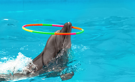 Glad beautiful dolphin in blue water in the swimming pool on a bright sunny day twist Gymnastic circle on his nose on the representation photo