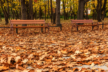 Wooden benches from the city park in the autumn colorful fallen leaves with sunny autumn day. City park in autumn